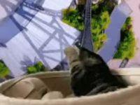 롤러코스터 타는 고양이