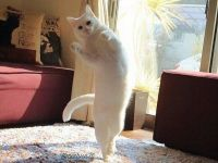 발레리나로 환생한 고양이